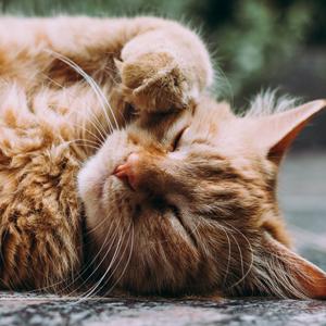 /archives/birthday-gift-cat_top.jpg