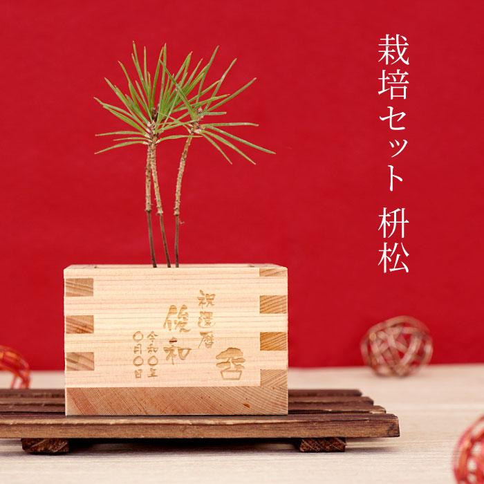 盆栽セット枡松の説明
