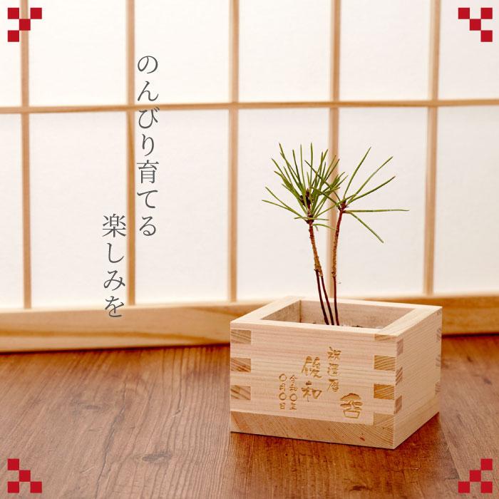 枡と松の写真