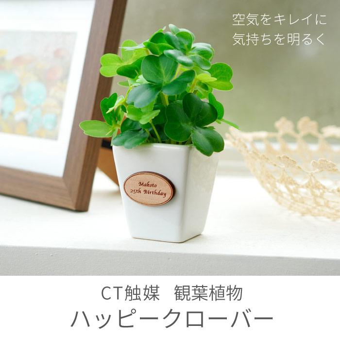 CT触媒観葉植物