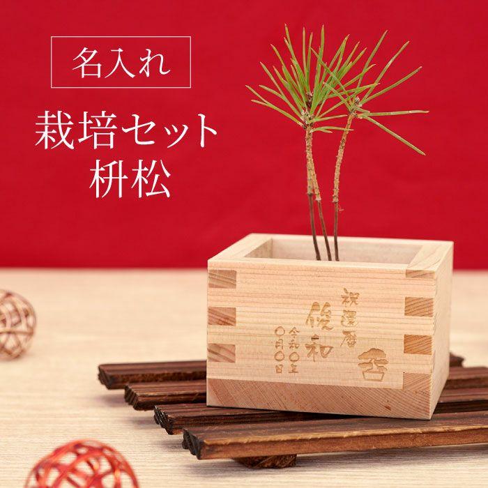 盆栽栽培セット 枡松