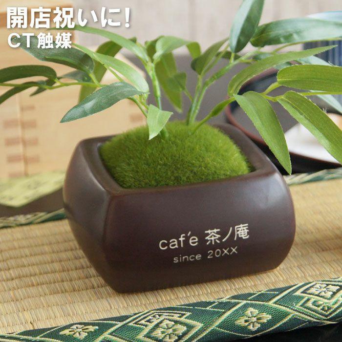 名入れCT触媒 観葉植物 バンブー苔鉢