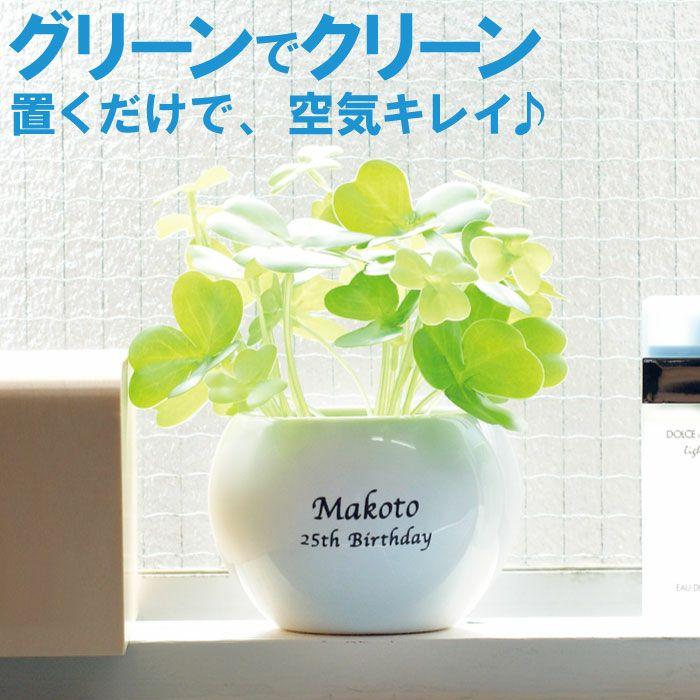 名入れCT触媒 観葉植物 ハッピークローバー